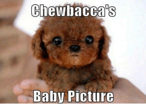 memes de chewbacca