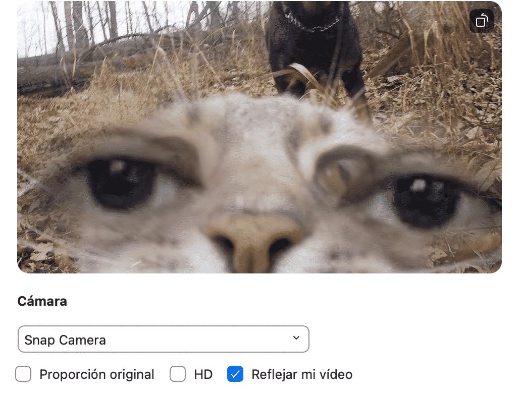 filtro de gato para Zoom